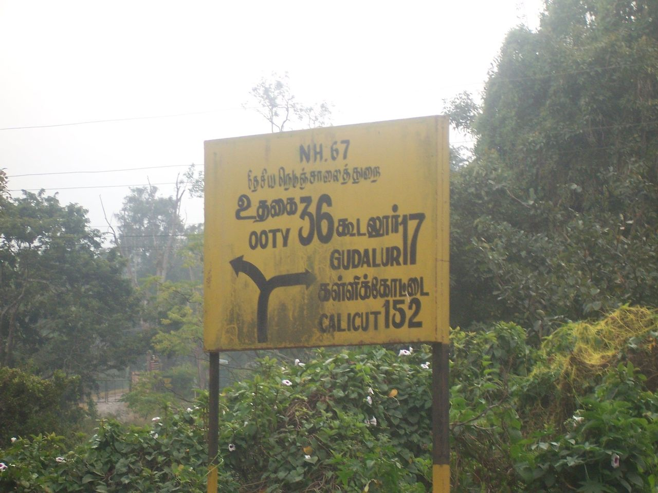 NH67, 17kms to Gudalur
