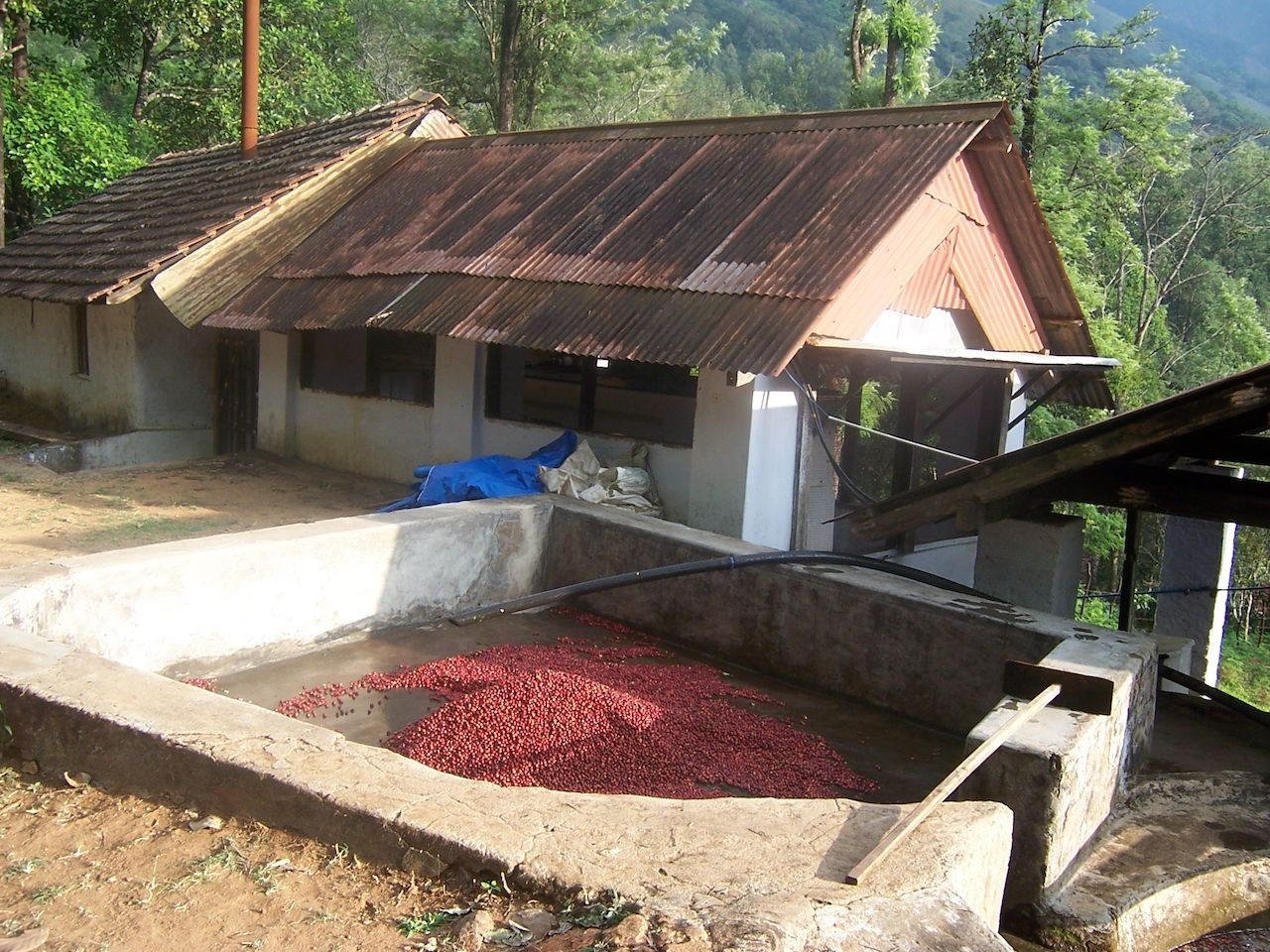 Once the berries have been collected and sorted into classes. They're taken to be pulped at a facility within the residential portion of the bungalow.