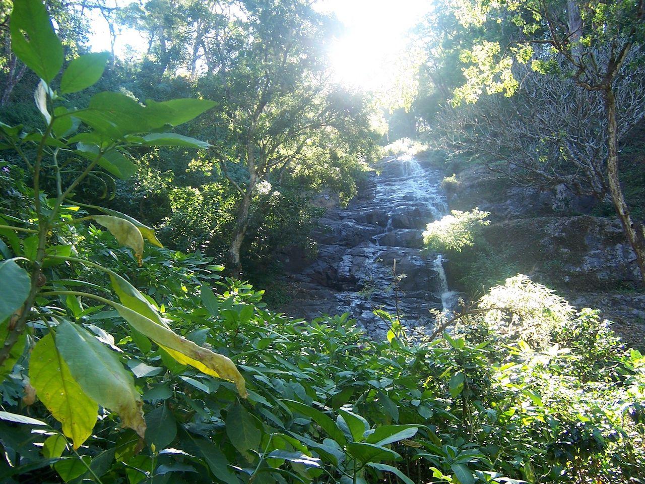 Waterfall, Balmaadi Coffee Estate