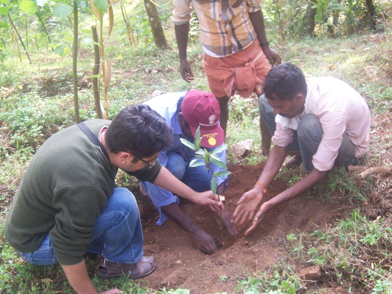 We planted shola trees with the help of the estate staff on Christmas day. Guests at Balmaadi are encouraged to attach name plaques to the saplings as a reminder of their visit.